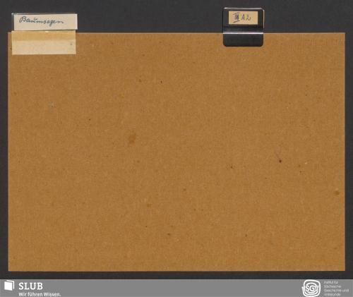 Vorschaubild von Baumsegen (III A 2)