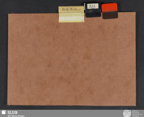 Vorschaubild von Kalb, Kalben (III A 2; I B)