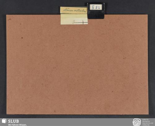 Vorschaubild von Mäusevertreiben (III B 2)